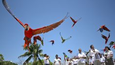 Awesome animal photos of 2013 [Slideshare]  Hundreds of scarlet macaws are released at Xcaret Park in the #RivieraMaya #Animals