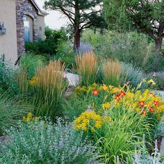 Xeric yard ideas on pinterest xeriscaping perennials for Natural grasses for landscaping