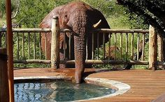 Elephant picture explains mystery of 'leaking jacuzzi'