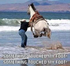 funny horses, funny pictures, funny beach, funny swimming pictures, funny pics of horses, at the beach, beach funny, something touched my foot, funni pictur