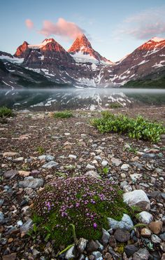 Mt. Assiniboine - Canadian Rockies - Alberta / British Columbia, Canada