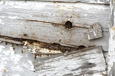 Bees live in the wall of an old shed.