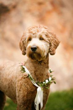 puppy ring bearer