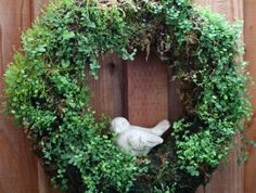 how about a living wreath using ground covers?  A LOT cheaper than succulents and it fills in faster.