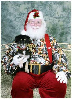 Raven with Santa #pinitforpetsmart