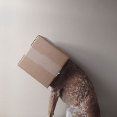Maddie With a Box on Her Head.