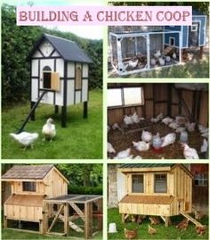 Building a Chicken House - 6 Crucial Tips