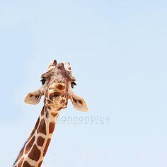 omg this giraffe face!