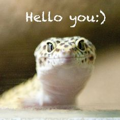 #heartmelt #LizardLoversAreTheNewCatLovers #lizards #cute #animals #zoo