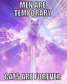 Cats Are Forever @Megan Ward Ward Ward Ward Ward Hardin
