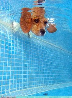 My beagle hated water... funny photo.