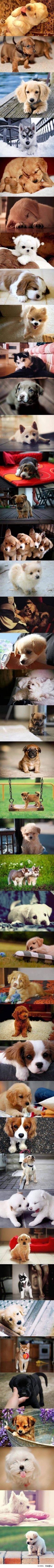 PUPPIES!!!! I want one!