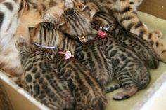 kitten, lunch