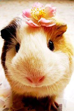 Piggy wears a flower