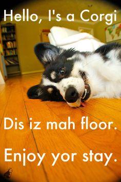I want a Corgi! #corgi #dog #cute