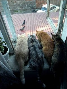 dinner, funny animals, peep show, the hunt, funny cats, pet, lunch, birds, cat lady