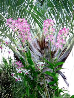 Orchids and Palm...