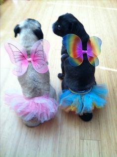 Perfect Halloween outfit for Charlie & Peyton, right @Meghan Krane Kinch @Lisa Phillips-Barton Schwartz @Jennifer Schwartz Cedarpoint