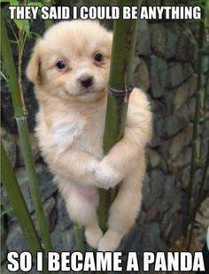 Cute Dog be Panda :) via http://www.gagish.com/