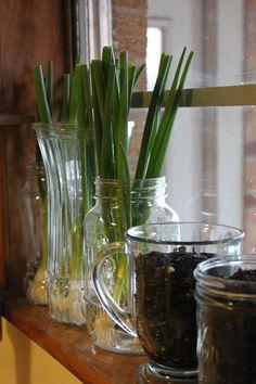 Windowsill herb garden
