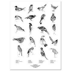 Guide To British Birds Print british bird, bird prints, artist art, birds, art art