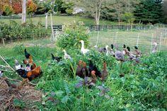 Cover Crops for the Best Garden Soil  TheTankFarm.org