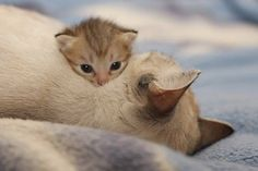 Mommy and baby cats