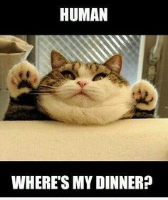 My cat Tux in a few years at the rate he's going hahaha!