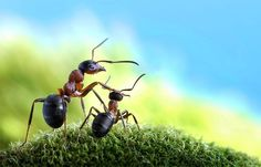 An unusual series of ants photography from Andrey Pavlov