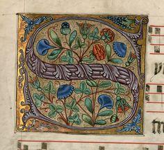 """Lettrine """"S"""" aux volubilis 1500-1600"""