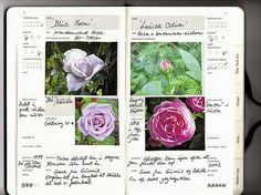 Good ideas on what to put in your garden journal.