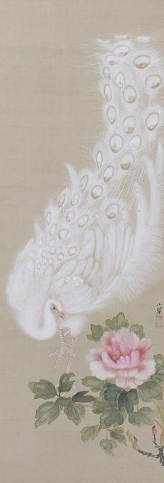 White Peacock, Kikuchi Shokin. Japanese hanging scroll painting.