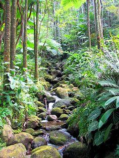 medit garden, garden big, botanical gardens