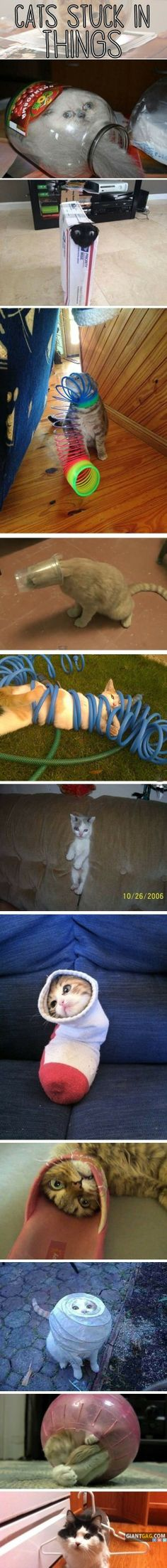Pictures of the day -35 pics- Cats Stuck In Things