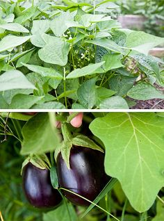 What to grow in a fall garden
