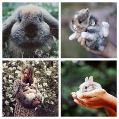 Easter Rabbits :)