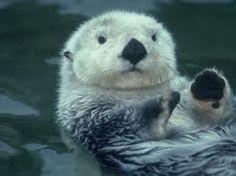 Just a little Sea Otter.