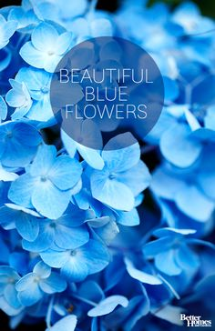 Add a pop of color to your garden with these beautiful blue flowers: http://www.bhg.com/gardening/design/color/blue-flower-garden-ideas/?socsrc=bhgpin021214blueflowers