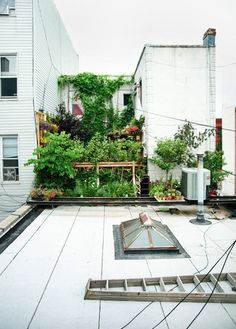 Busy roof garden