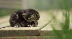 So tiny! #kitten #tiny #adorable #cute