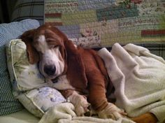 Just a big wrinkle of sweet dreams....I will have another to do this one day.