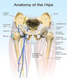 Easy Steps You Can Take Today to Erase Hip Pain. For more on hip pain relief read: http://painkickers.com/hip-pains/