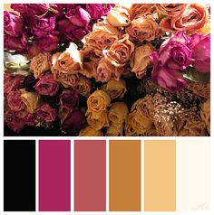 Dried Roses, eye color palate