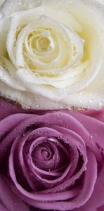 How to Preserve Flowers in Epoxy Resin.  Need to do this with my roses.