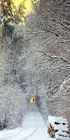tree, pathway, snow, winter wonderland, road, winter scenes, walk, travel photography, winter path