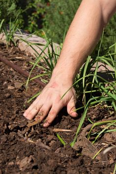 You don't need Miracle-Gro. My son smoothing soil after  planting garlic. You get good soil from adding compost and manure to your garden.