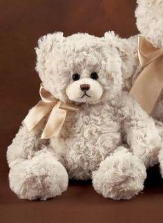 Cute Bearington Bear