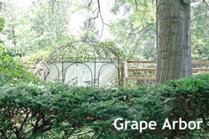 grape arbor gazebo