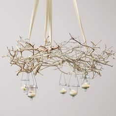 Natural Branch Chandelier