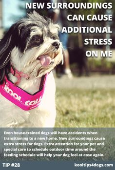 Even house-trained dogs will have accidents when transitioning to a new home. New surroundings cause extra stress for dogs. Extra attention for your pet and special care to schedule outdoor time around the feeding schedule will help your dog feel at ease again.